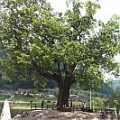 04.21~04.22 정선 여행] 대촌마을, 동그라미마을, 정선 동강, 임계, 화암팔경,개미들마을