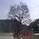 [77번째 여행 2편][섬진강 벚꽃터널][1일차] 스트레스를 날려준 오랫만에 여행