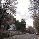 2020-04-12 일] 이포보에서 만난 멋진 청년과 여주 벚꽃길 6.4Km를 달리다