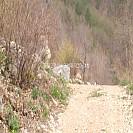 [76번째 여행 7편][정선 오지에 가다][2일차] 덕산기 계곡 오지마을에서 하룻밤을 꿈꾸다.